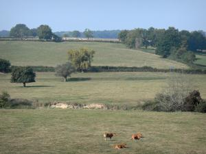 Besbre valley - Series of pasture