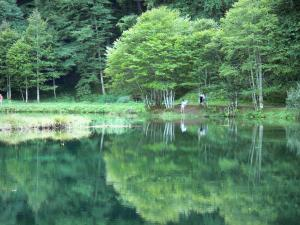 Bethmale lake - Trees reflecting in the waters of the Bethmale lake; in the Ariège Pyrenees Regional Nature Park, in Le Couserans area, in the Bethmale valley