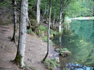 Bethmale lake - Bank planted with trees and Bethmale lake; in the Ariège Pyrenees Regional Nature Park, in Le Couserans area, in the Bethmale valley