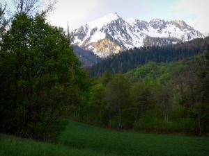 Boscodon forest - Meadow, trees of the forest and mountain with snowy summit (snow); in the Écrins National Nature Park