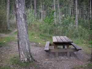 Boscodon forest - Picnic table and trees; in the Écrins National Nature Park