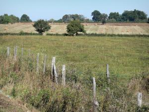 Bourbonnais landscapes - Fence, vegetation, hay bales in a field and trees