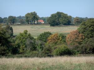 Bourbonnais landscapes - Combination of fields and trees