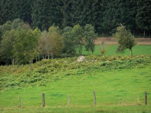 Bourbonnais mountains - Grassland and trees