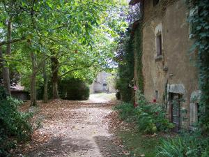 Brancion - Road dotted with dead leaves, facade of a house, trémières roses (Alcea rosea flowers) and trees