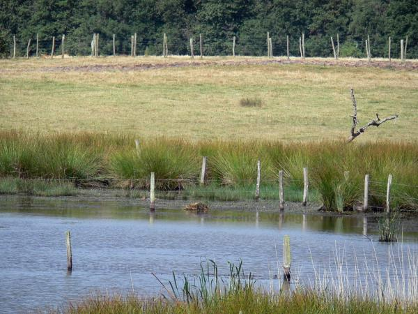 La Brenne landscapes - Lake, aquatic plants, grass and fence; in La Brenne Regional Nature Park