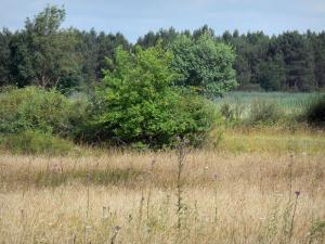 La Brenne landscapes - Field dotted with wildflowers, trees; in La Brenne Regional Nature Park