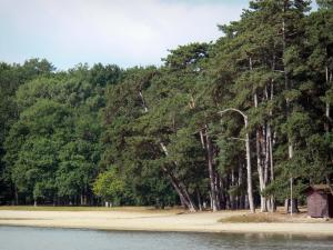 La Brenne landscapes - Beach of the Bellebouche lake and trees; in La Brenne Regional Nature Park