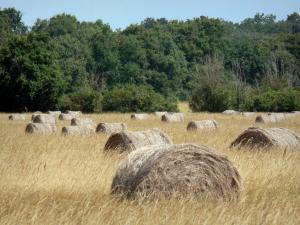 La Brenne landscapes - Hay bales in a field and trees in the background; in La Brenne Regional Nature Park