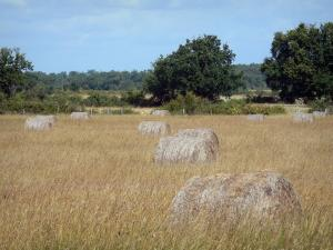 La Brenne landscapes - Hay bales in a field and trees in background; in La Brenne Regional Nature Park