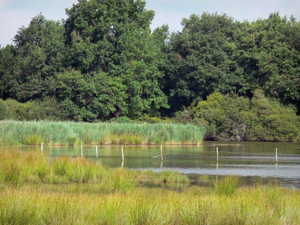 La Brenne Regional Nature Park - Lake, reeds, wet heath and trees