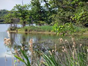 La Brenne Regional Nature Park - Mer Rouge lake, plants and trees along the water