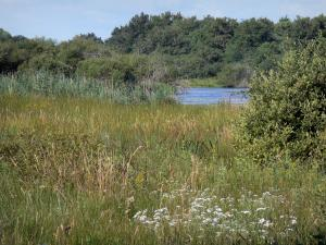 La Brenne Regional Nature Park - Vegetation and reeds, pond and trees