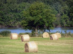 La Brenne Regional Nature Park - Hay bales in a field and tree along the lake