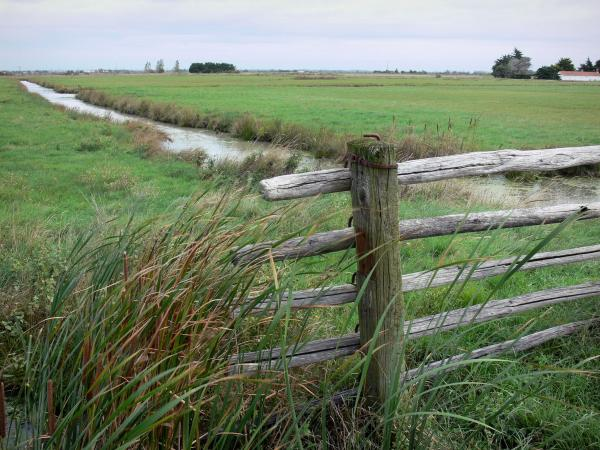 Breton marsh in the Vendée - Reeds and barrier in foreground, small canal and meadows