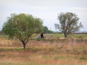 Breton marsh in the Vendée - Trees and horse in a prairie with high grass
