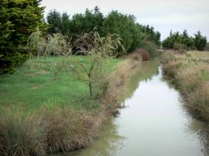 Breton marsh in the Vendée - Small canal (waterway) lined with trees and meadows