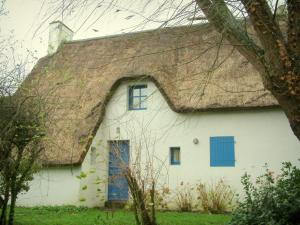 Brière Regional Nature Park - White House with a thatched roof (thatched cottage), shrubs and tree