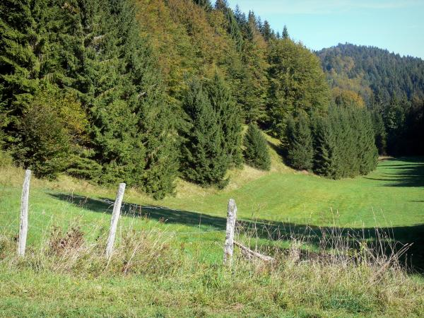 Bugey - Fir tree road in Upper Bugey: fence, grass and trees