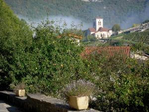 Bugey - Upper Bugey: view of the bell tower of the church of the village of Cerdon, trees and vines