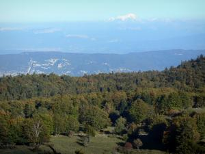 Bugey - Forest in Lower Bugey overlooking the Alps and the Mont Blanc mountain range