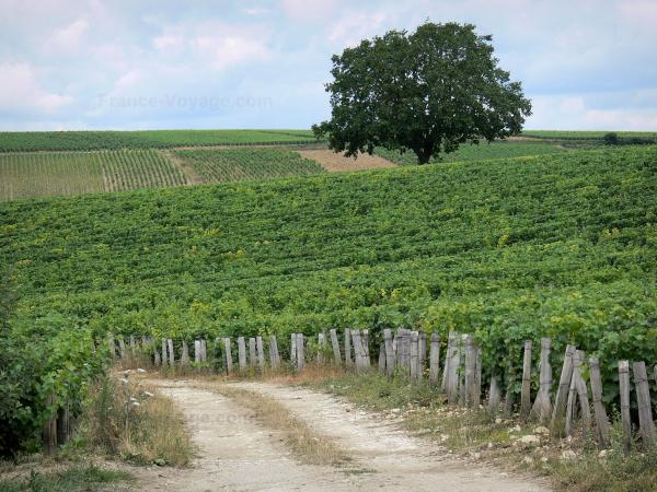 Guide of Burgundy - Tourism, holidays & weekends in Burgundy