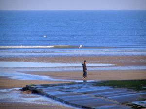 Cabourg - Côte Fleurie (Flower coast): sandy beach of the seaside resort with a walker at ebb tide, flying sea bird, and the Channel (sea)