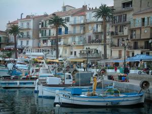 Calvi - Fishing boats of the port (marine), quaysides, palm trees, café terraces and restaurants, houses