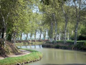 Canal du Midi - Canal lined with trees, towpath