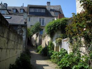 Candes-Saint-Martin - Narrow street lined with plants and houses of the village
