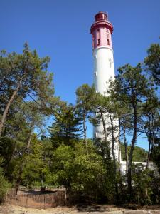 Le Cap-Ferret - Cap-Ferret lighthouse surrounded by pine