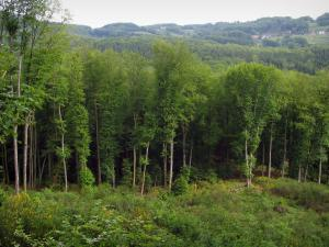 Chabrières forest - Trees of the national forest and shrubs