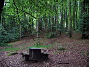 Chabrières forest - Picnic table and trees in the national forest