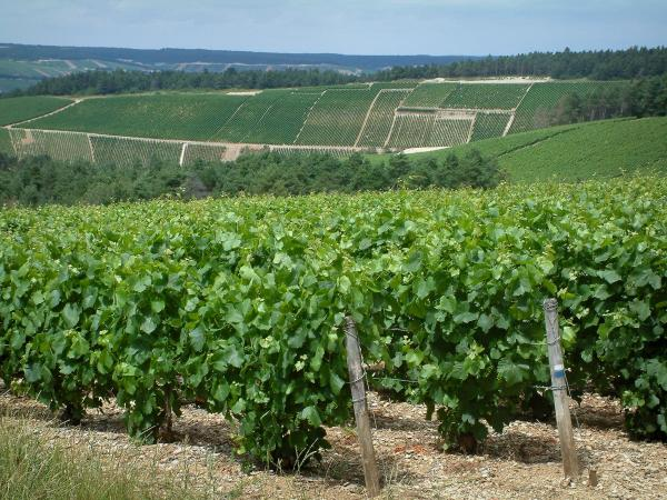 Guide of Champagne-Ardenne - Tourism, holidays & weekends in Champagne-Ardenne