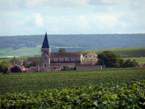 Champagne vineyards - Village of Sacy with its church and its houses, vineyards of the Reims Mountain (Champagne vineyards, in the Reims mountain Regional Nature Park), trees and forest