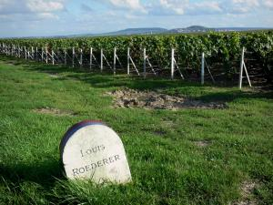 Champagne vineyards - Champagne vineyards: milestone of a famous Champagne House, vineyards of the Reims Mountain and green vegetation