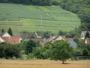 Champagne vineyards - Roofs of houses, trees, and vine fields of the Champagne vineyards