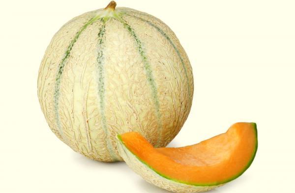 Charentais melon gastronomy holidays guide - Culture du melon charentais ...