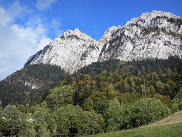 Chartreuse Regional Nature Park - Chartreuse mountains: cliffs overhanging the trees of the forest