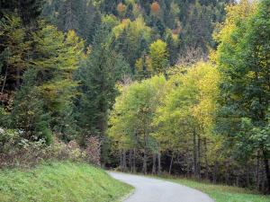 Chartreuse Regional Nature Park - Chartreuse mountains: tree-lined road