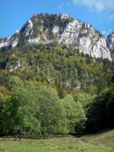 Chartreuse Regional Nature Park - Chartreuse mountains: cliffs, forest, trees and meadow