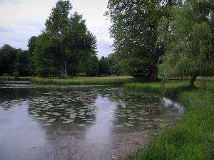 Château de Chantilly - Park: expanse of water dotted with water lilies, reeds, lawns and trees