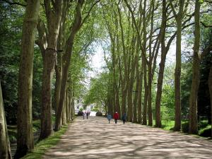 Château de Chenonceau - Path lined with trees leading to the castle