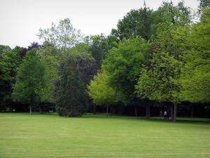 Château de Cheverny - Trees and lawn of the park