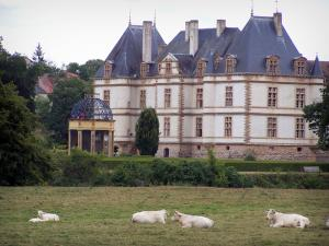 Château de Cormatin - Château, gardens, aviary; Charolais cows in a meadow in foreground