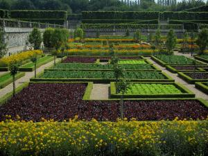 Château de Villandry and gardens - Flowers and vegetables of the vegetable garden