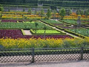 Château de Villandry and gardens - Flowers, vegetables and trees of the vegetable garden