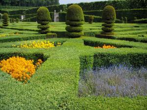 Château de Villandry and gardens - Flowers and cut shrubs of the ornament garden