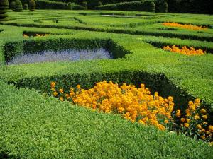 Château de Villandry and gardens - Flowers of the ornament garden