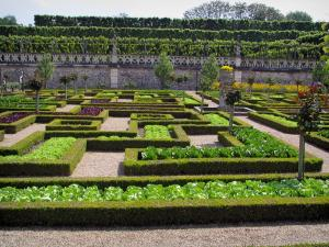 Château de Villandry and gardens - Vegetables of the vegetable garden